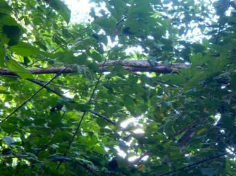 boa-in-tree